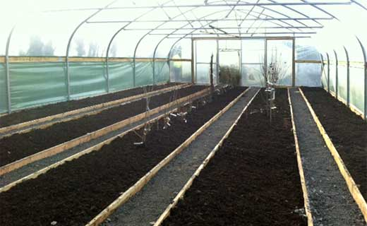 The 'Growning 